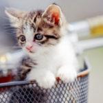 動物病院の求人募集へ転職し、動物薬剤師になるのは可能か
